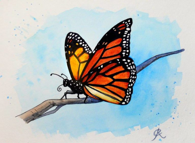 Butterfly Watercolour