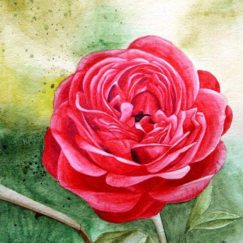 RoseWaterColour
