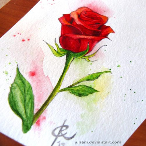 pen_and_wash_rose_by_juhani_db1izbz-fullview